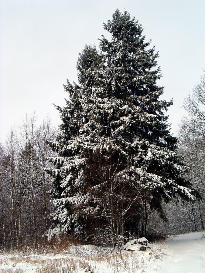 Weihnachten im Wald lizenzfreies stockbild