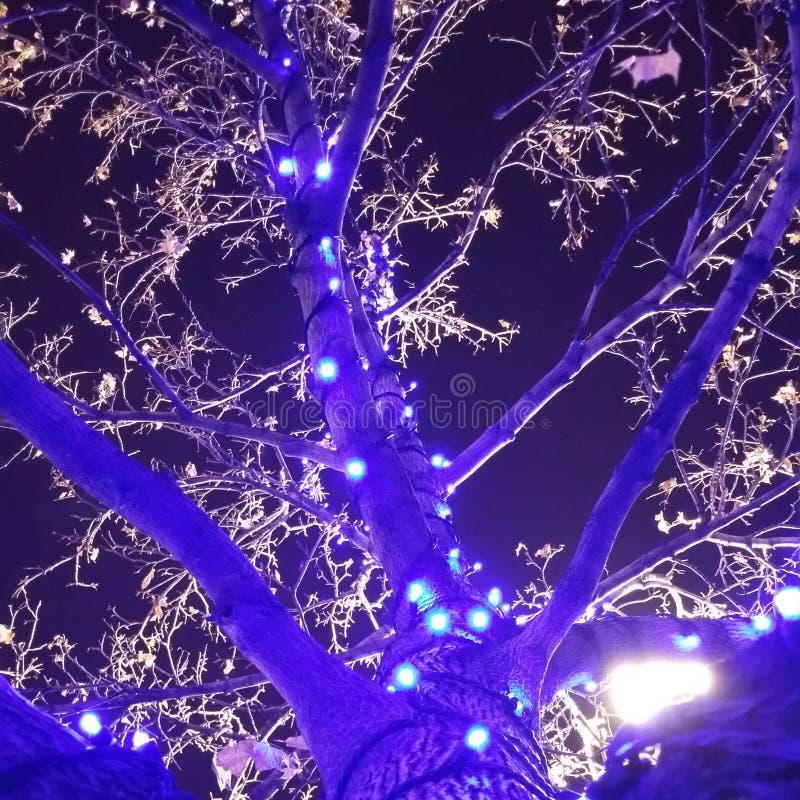 Weihnachten in Salt Lake City lizenzfreie stockfotografie