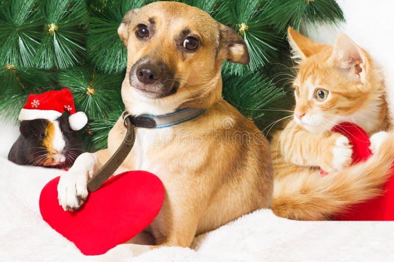 Weihnachten und Haustiere stockfotografie