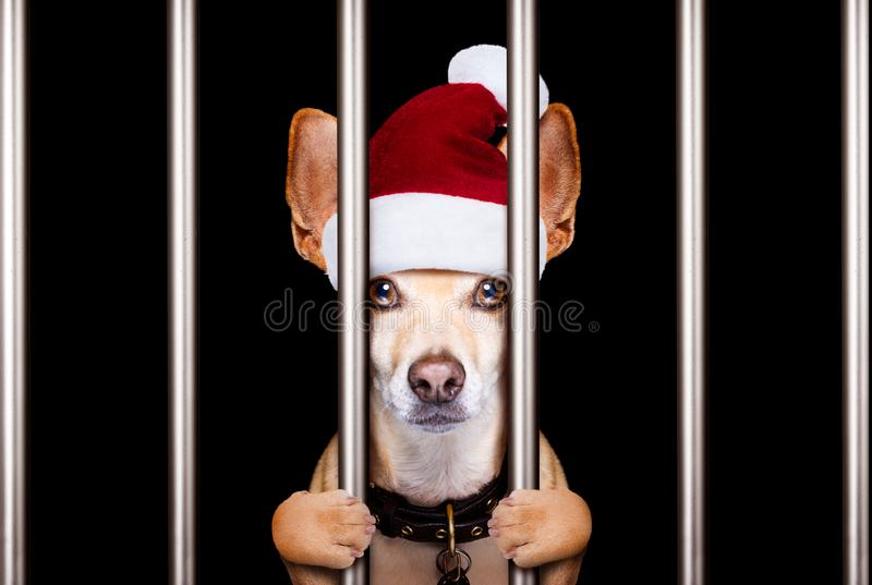 Weihnachtenmugshothund stockfoto
