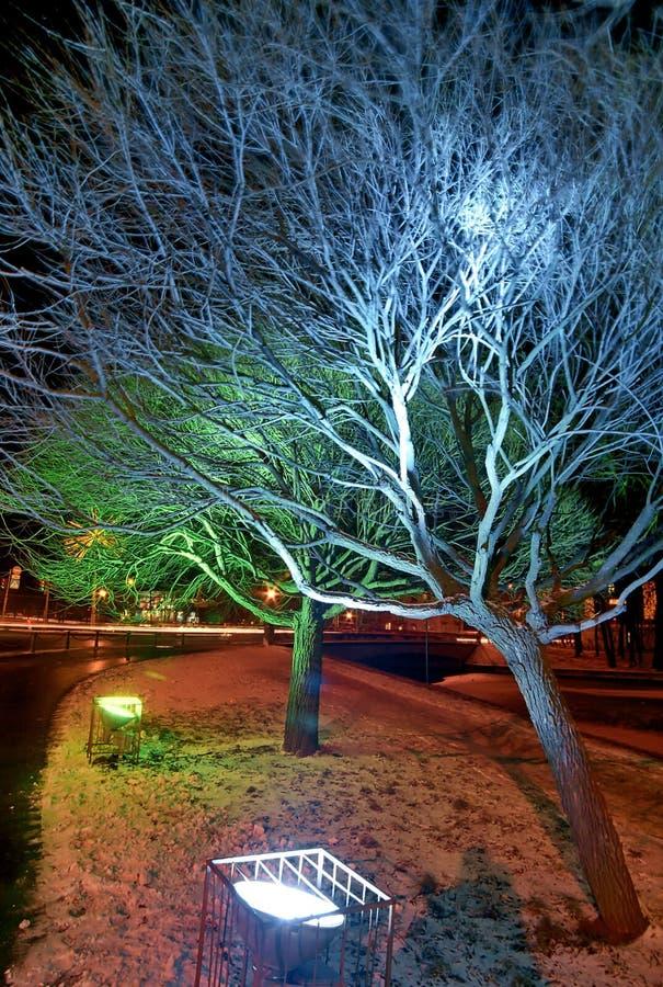 Weihnachtsablichtung der Bäume lizenzfreie stockfotos