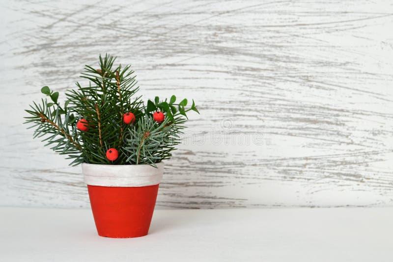 Weihnachtsanordnung im Tongefäß stockbilder