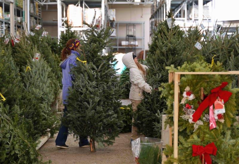 Weihnachtsbäume, die bei der Mutter-Tochter-Mannschaft gekauft werden stockfotografie