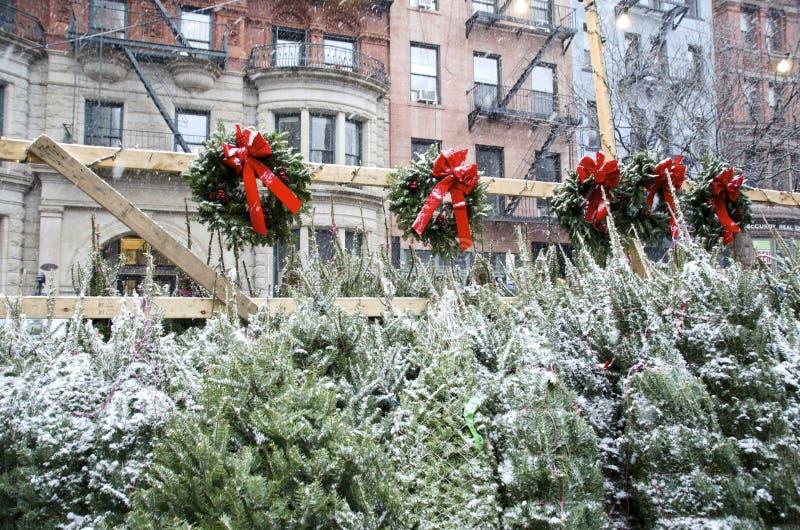 Weihnachtsbäume für Verkauf stockfotografie