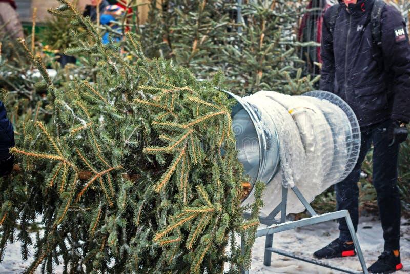 Weihnachtsbäume am Markt des Landwirts für Verkauf während der Weihnachtsjahreszeit Gitter und Tunnel für Weihnachtsbaumverpackun stockfotos