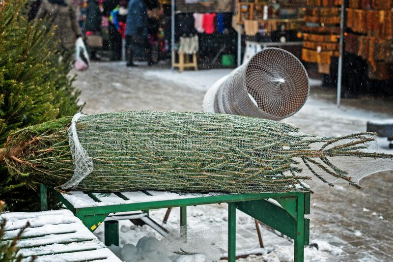Weihnachtsbäume am Markt des Landwirts für Verkauf während der Weihnachtsjahreszeit Weihnachtsbaum wird in einem Gitter für trans stockbild