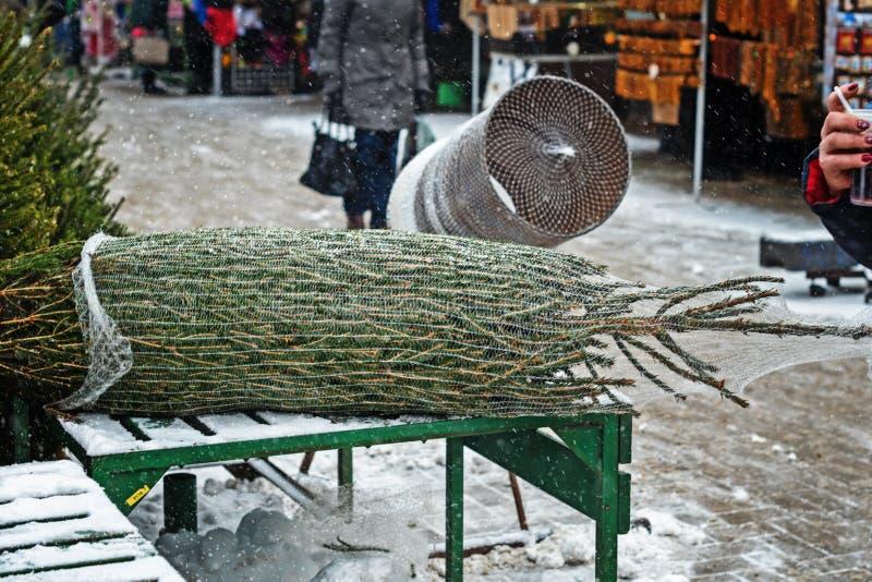 Weihnachtsbäume am Markt des Landwirts für Verkauf während der Weihnachtsjahreszeit Weihnachtsbaum wird in einem Gitter für trans stockfotografie