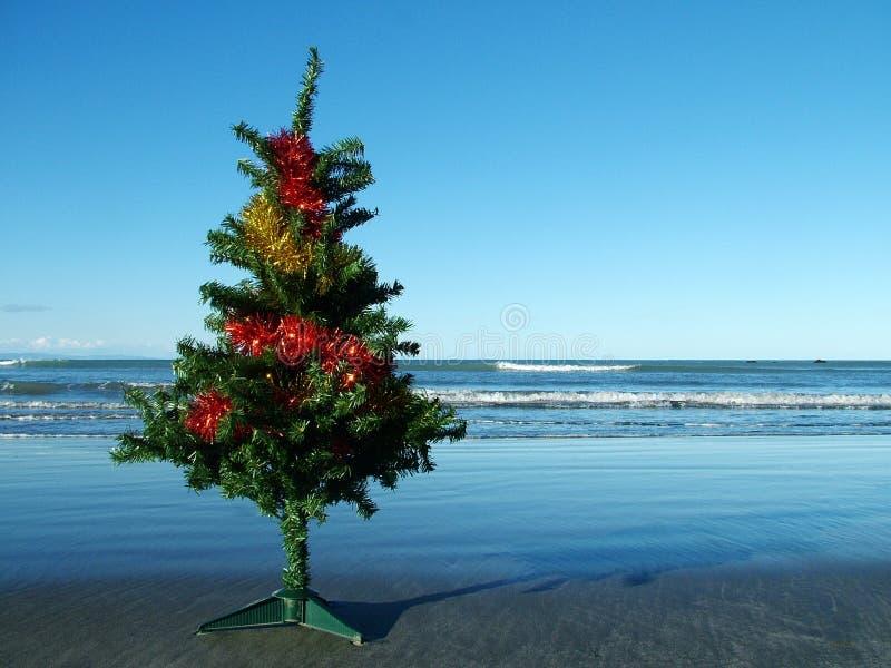 Weihnachtsbaum auf dem Strand   stockfotos
