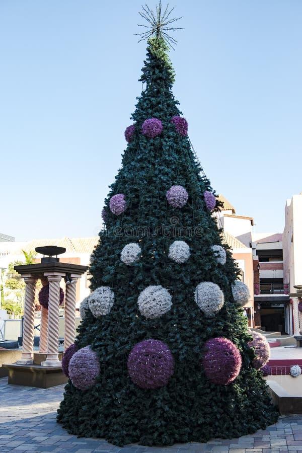 Weihnachtsbaum auf tropischer Insel Aruba, karibisches Meer stockfotografie