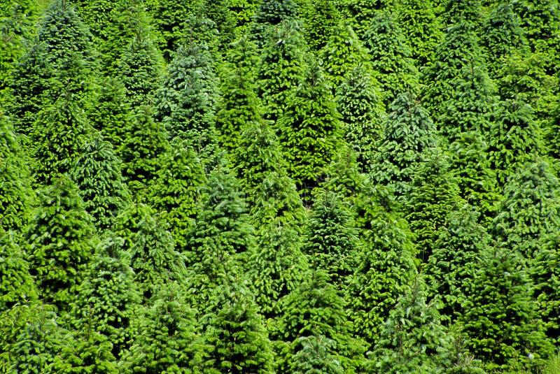 Weihnachtsbaum-Bauernhof stockbild