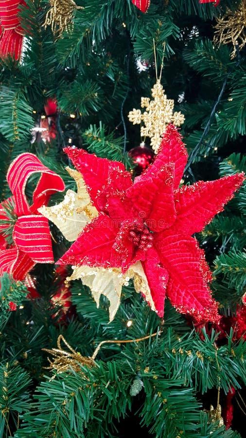 Weihnachtsbaum-Blume stockfotografie
