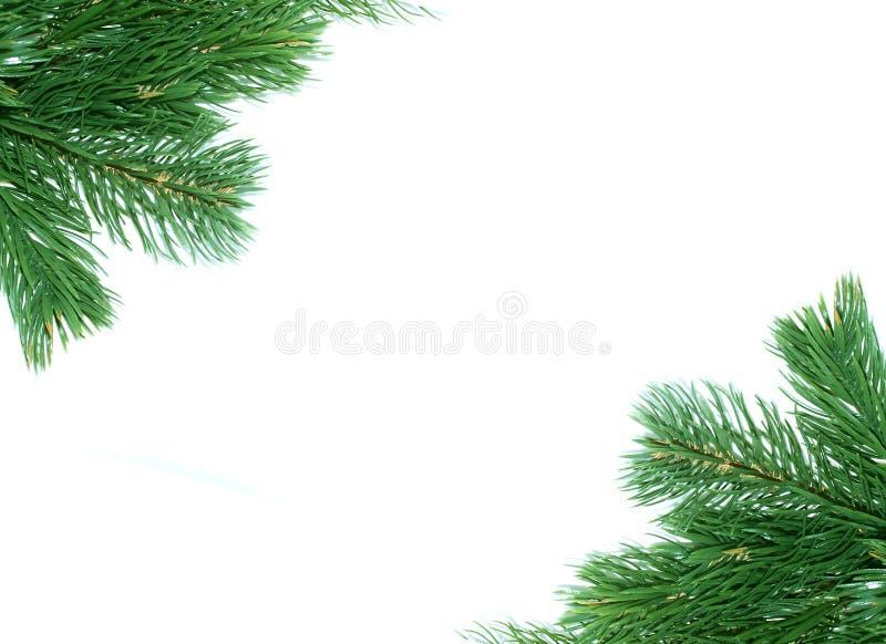 Weihnachtsbaum-Dekorationfeld stockbilder