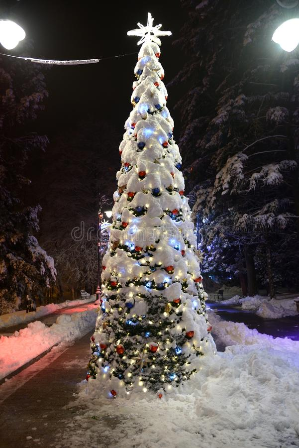 Weihnachtsbaum in den Lichtern und Schnee in der Parkgasse mit Straßenlaternen nachts lizenzfreie stockbilder