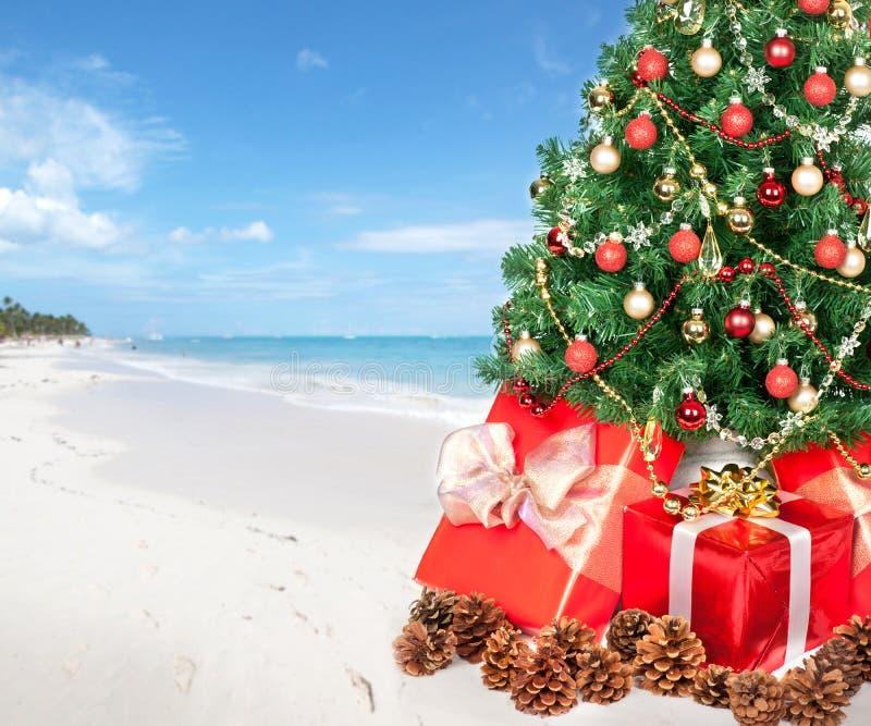 Weihnachtsbaum der Strand lizenzfreie stockfotos