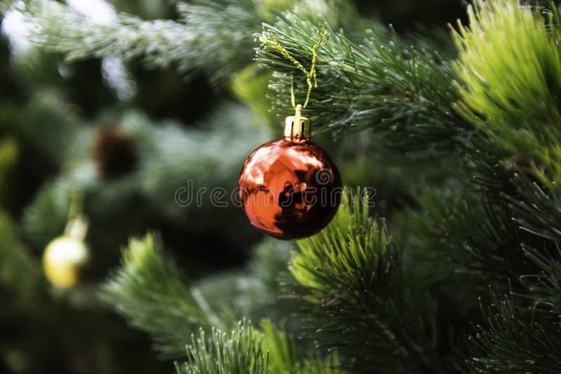 Weihnachtsbaum für das neue Jahr stockfotografie