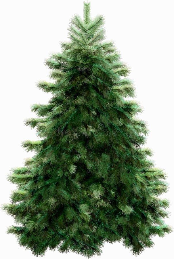 Weihnachtsbaum mit Ausschnittspfad stockbild