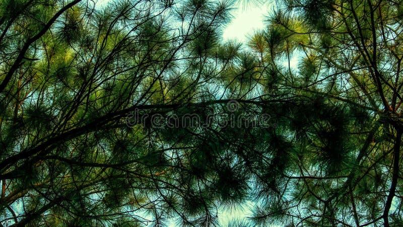 Weihnachtsbaum mit Himmel lizenzfreies stockfoto