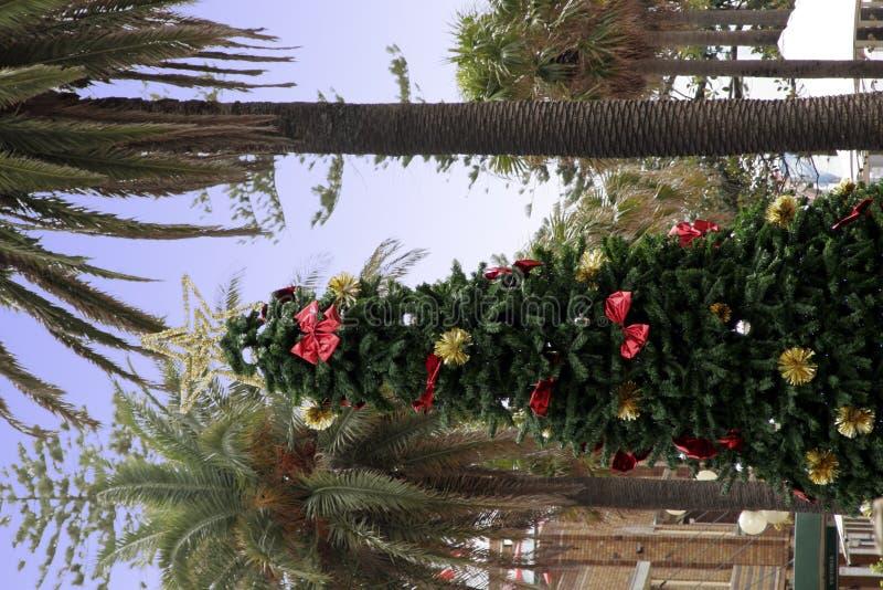 Weihnachtsbaum nahe bei Palme lizenzfreies stockfoto