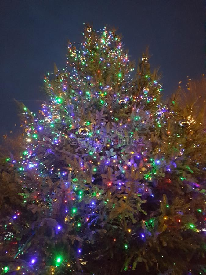 Weihnachtsbaum saisonal lizenzfreie stockfotografie