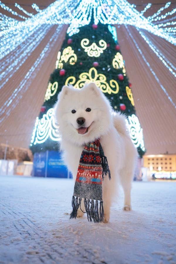 Weihnachtsbaum und Samoyed Hund lizenzfreies stockfoto