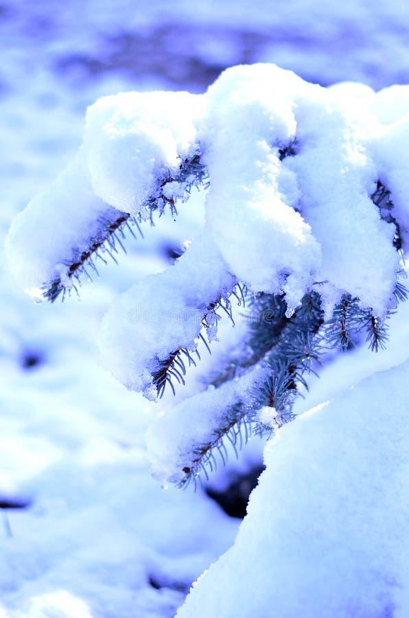 Weihnachtsbaum und Schnee stockfotos