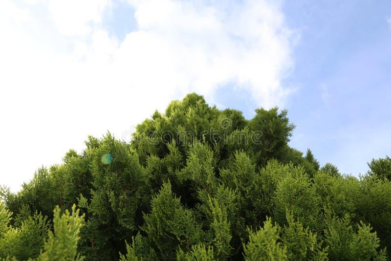 Weihnachtsbaum zum Himmel lizenzfreies stockfoto