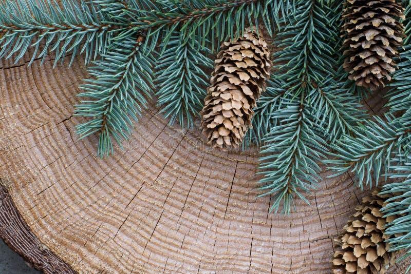Weihnachtsbaumast und -stöße auf einem hölzernen Hintergrund Thema des neuen Jahres Schöne hölzerne Beschaffenheit mit Sprüngen stockbilder