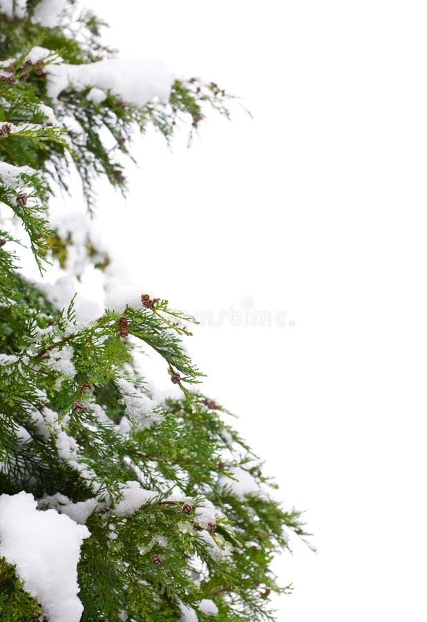 Weihnachtsbaumrand lizenzfreie stockfotografie