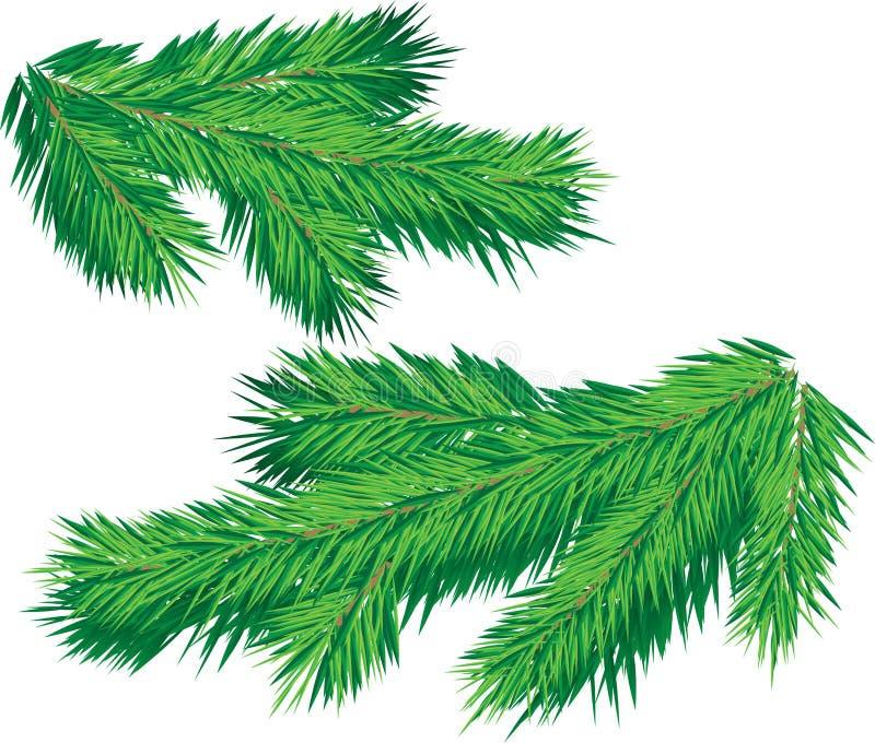 Weihnachtsbaumzweig vektor abbildung
