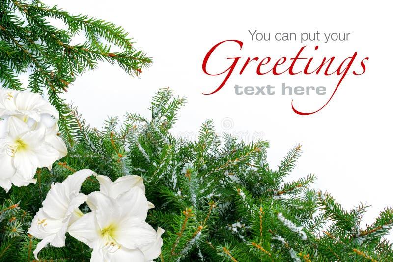 Weihnachtsbaumzweige mit Amaryllis lizenzfreie stockbilder
