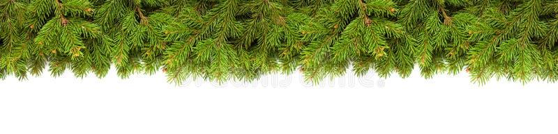 Weihnachtsbaumzweige in Weiß stockbilder