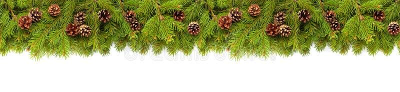 Weihnachtsbaumzweige in Weiß stockfotografie