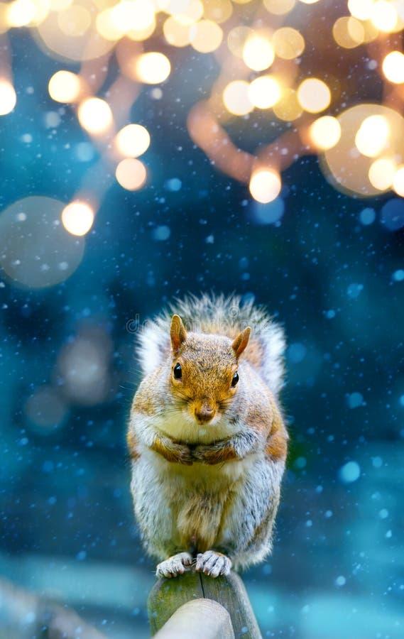 Weihnachtsfahnenhintergrund; nettes Eichhörnchen im Wintergarten stockbild