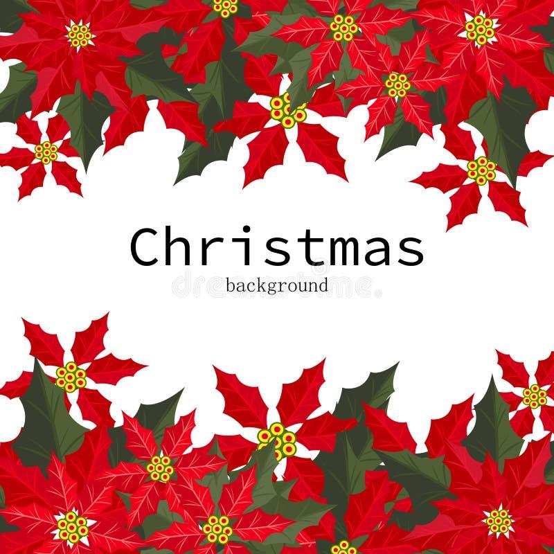 Weihnachtsferienzeithintergrund mit roten Poinsettia-Weihnachtsblumen- und -stechpalmenbeeren vektor abbildung