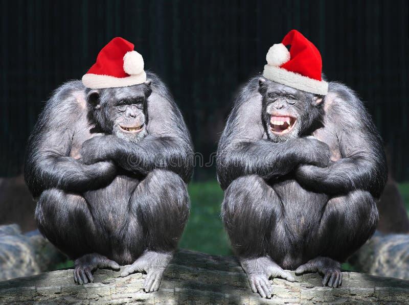 Weihnachtsfest Drei recht reizvolle Mädchen, die Weihnachtsmann-, Katze- und Häschenkleidung tragen