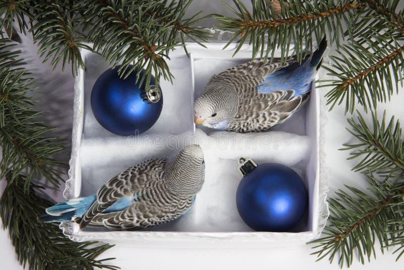 Weihnachtsgeschenk, kleiner Vogel zwei lizenzfreie stockbilder