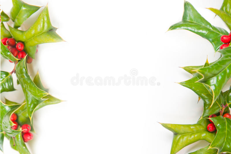 Weihnachtsgrüner Rahmen mit Stechpalmebeerenisolat lizenzfreies stockfoto