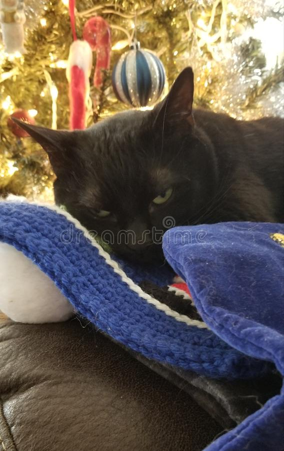 Weihnachtshaar lizenzfreie stockfotografie