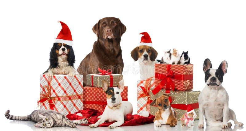 Weihnachtshaustiere lizenzfreie stockbilder