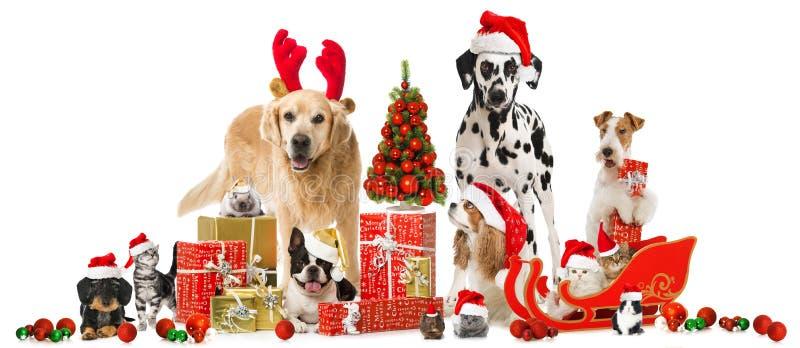 Weihnachtshaustiere stockbilder