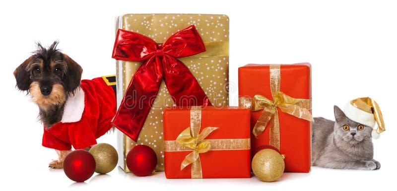 Weihnachtshaustiere mit Weihnachtsgeschenken stockfoto