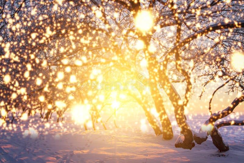 Weihnachtshintergrund mit glühenden Schneeflocken Glänzende magische Lichter in der Winternatur Landschaftswintermärchen stockfotografie
