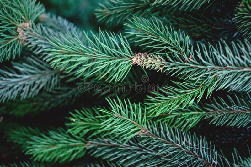 Weihnachtshintergrund mit schönen grünen Kieferbrunch clos stockfotos