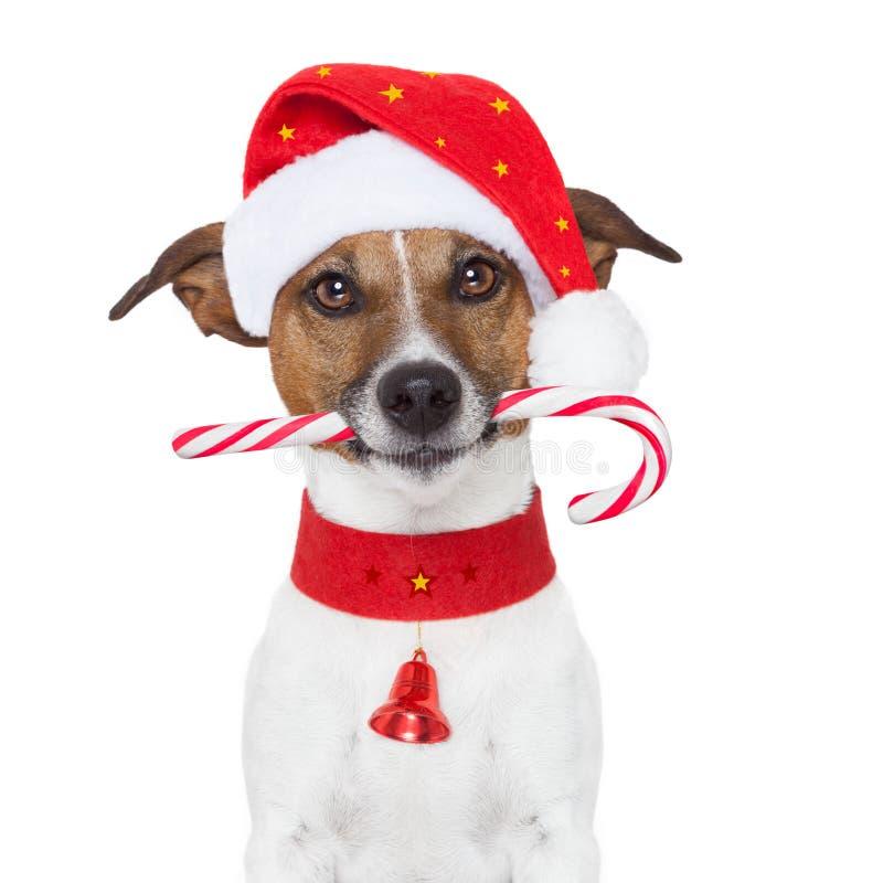Weihnachtshund lizenzfreie stockbilder