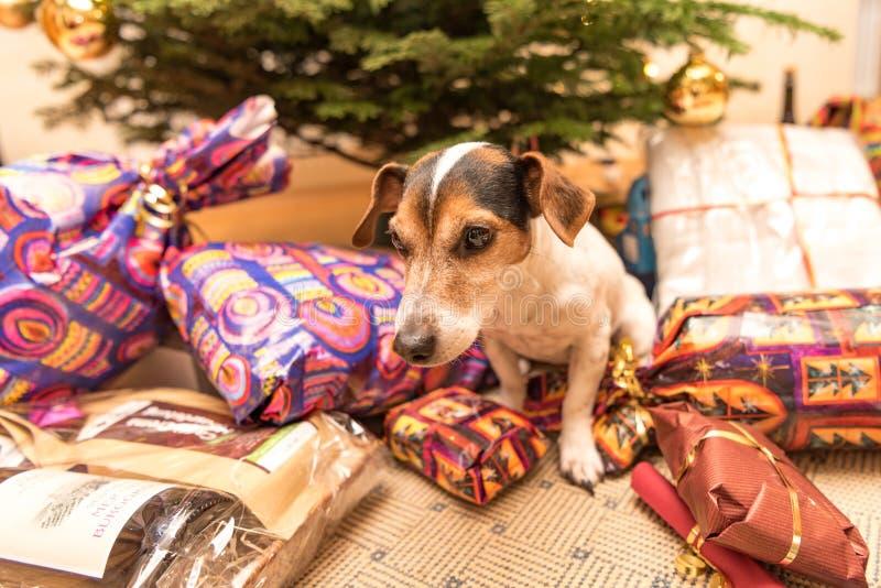 Weihnachtshund mit mand Geschenken und Geschenken lizenzfreie stockfotos