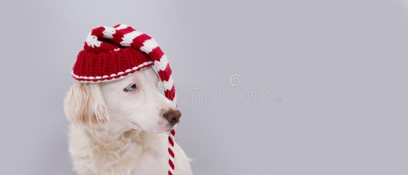 WEIHNACHTShundehut NETTER WELPE, DER EINE GESTREIFTE ROTE SANKT-KAPPE MIT BLAUEN AUGEN TRÄGT Lokalisiert gegen grauen Hintergrund stockfotos