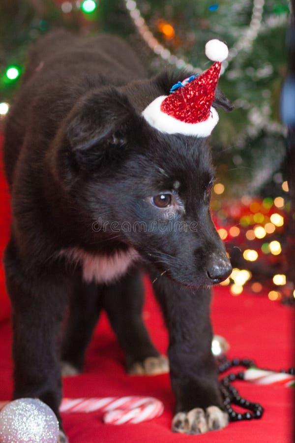 Weihnachtshundekonzept Schwarzer Hund Welpentiere Neues Jahr lizenzfreie stockfotos
