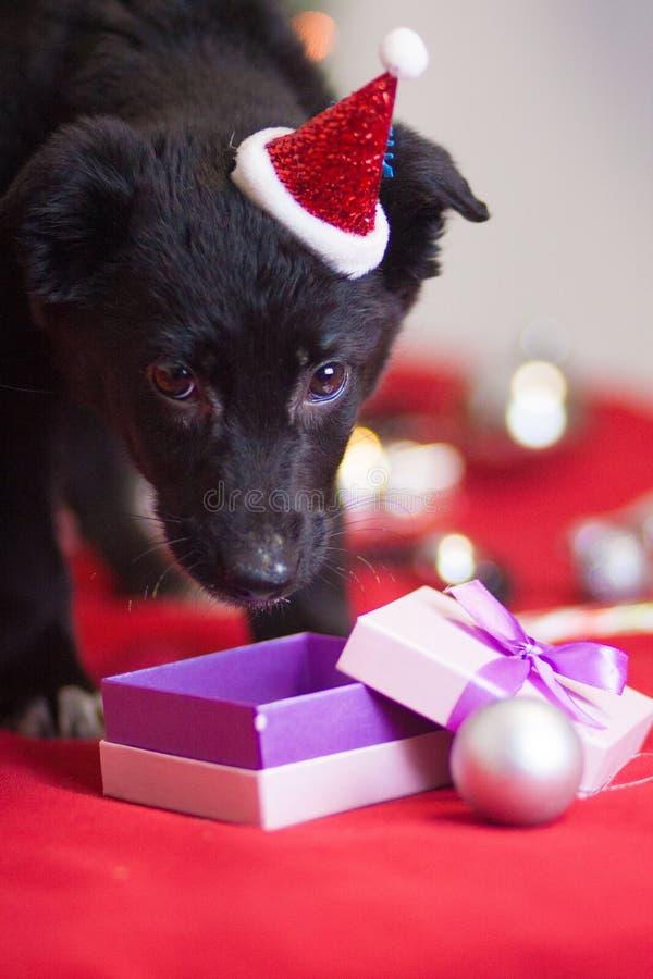 Weihnachtshundekonzept Schwarzer Hund Welpentiere Neues Jahr stockfotos