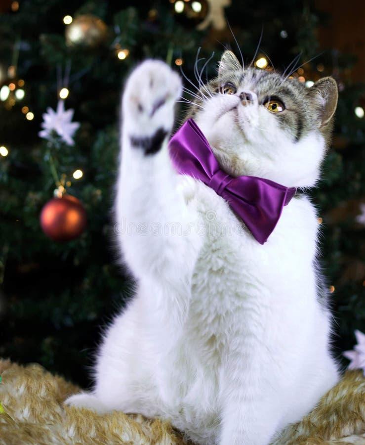 Weihnachtskätzchen stockfoto