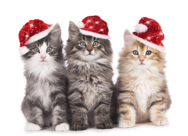 Weihnachtskätzchen lizenzfreie stockbilder